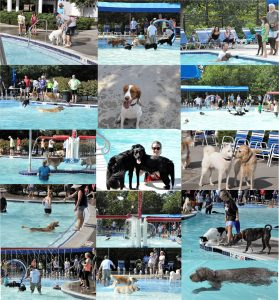 2016 POOCH POOL PARTY